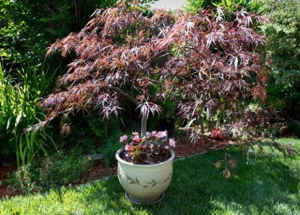 Shade Loving Plants Can Brighten The Garden