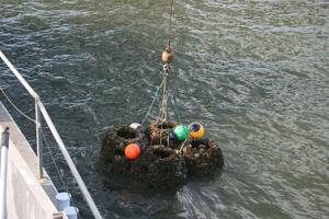 Artificial reef restoration