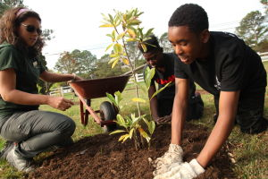 <p>From left, Jessica McCubbin, a Pickering Creek naturalist, and St. Michaels High School students Tahliq Moaney and Antonio Smith, plant a magnolia tree, Wednesday, Oct. 29. That tree was one of 300 planted by the environmental science students at the Inn at Perry Cabin and neighboring property.</p>