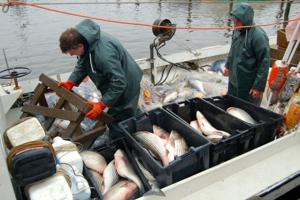 Watermen of the Chesapeake Bay