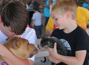 Cats, dogs get care during annual health fair