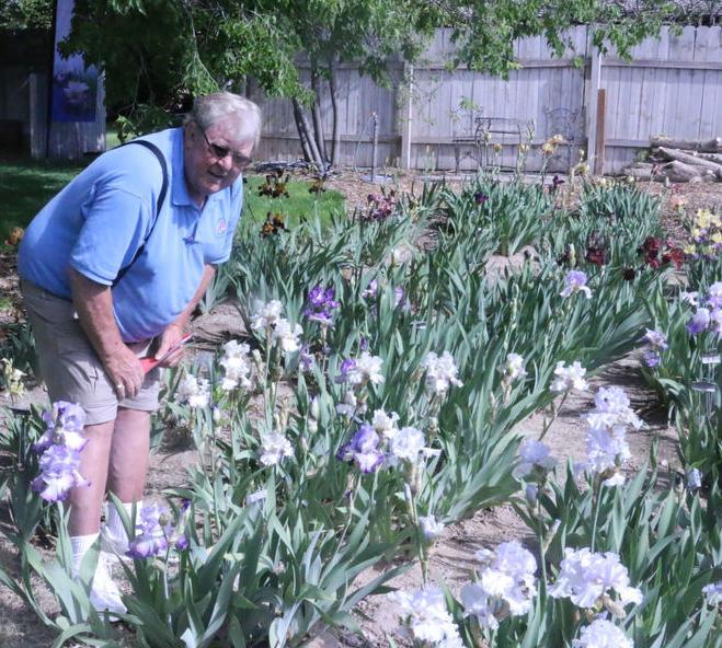Stop to enjoy the flowers Saturday, Iris Society readies annual show
