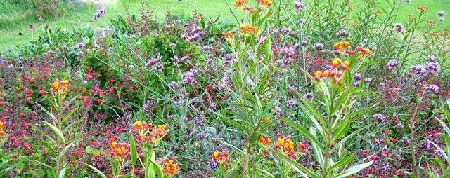 Denton Master Gardener Fall Garden Festival Set For Oct 1