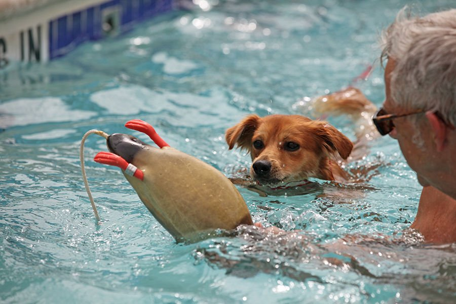 Dog days of summer canines to fill vanston pool saturday - Vanston swimming pool mesquite tx ...