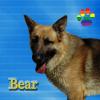CAPA Pet of the Week