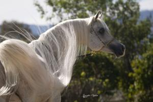 Heavenly horses of the Valley