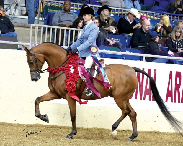 Sy Valley Arabian Horses Take Over Tulsa