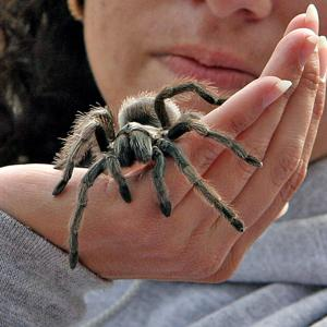 'Creepy Creatures' at Neal Taylor Nature Center