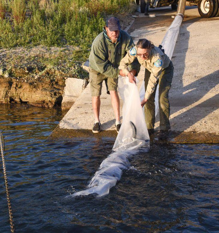 Gallery cachuma lake trout plant local for Cachuma lake fishing