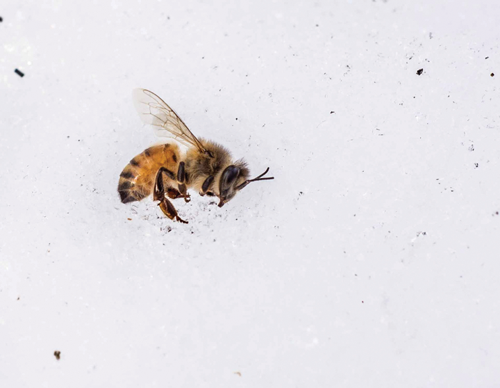 Food supply threatened by bee losses due to cold weather