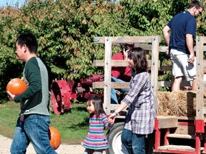 Spicer Orchards in Hartland Township has hayrides for you-pick pumpkins on the weekends. During the week, visitors can drive or walk their choices up to be weighed in the store.