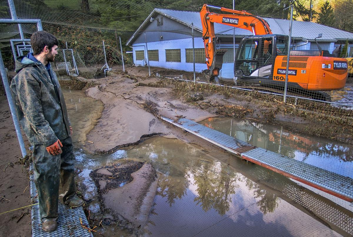 Lower kalama river fish hatchery nearly decimated by for Kalama river fishing