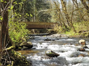Counties receive several grants to improve fish habitat