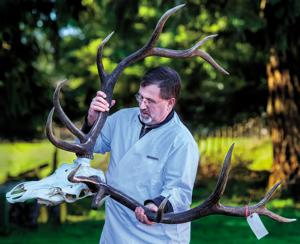 Toutle man uses beetles and bleach to build thriving skeletal business