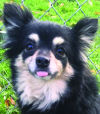 Slideshow: Pets of the Week