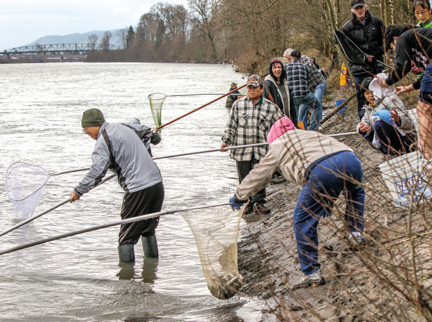 Smelt-dipping a net gain for Cowlitz, Sandy anglers