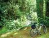 Crown Zellerbach Trail