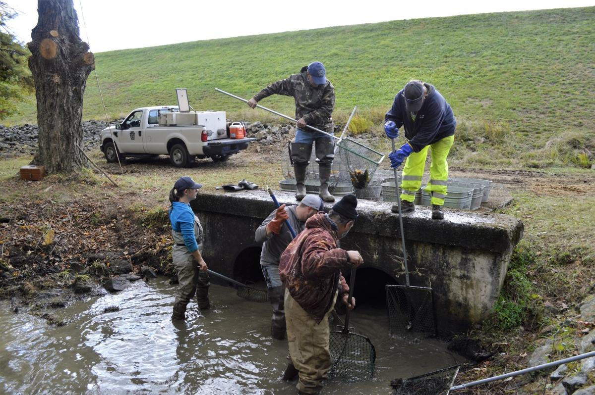 Fish salvage saves 39 thousands 39 of fish news for Pa fish and boat