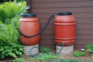 <p>Collecting rain in rain barrels when it is plentiful and storing it until it is needed is an effective way to manage water for the landscape.</p>