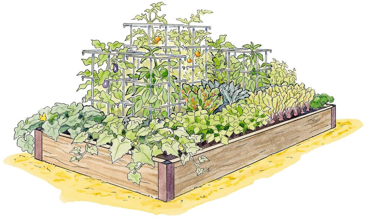 Make plans for high yield vegetable garden this season for 60 ft garden design