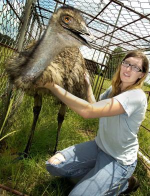 Emu Captured