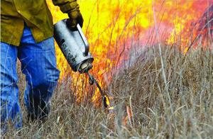 Drip torches facilitate effective prescribed burns
