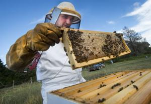 Texas A&M professor pushing for tougher regulations on imported honey