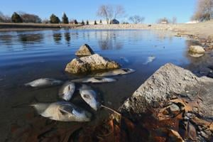 Fish kill goes smelly at Suck's Lake, stocking discontinued