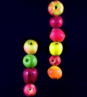 Apples … good to the core: But what is the difference between a Gala and a Fuji?