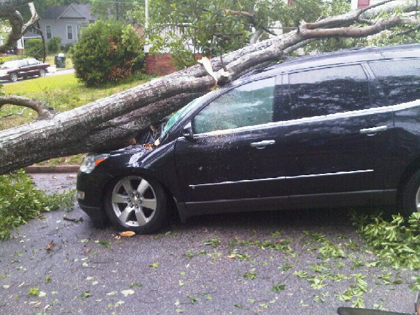 Falling tree lands on passing van