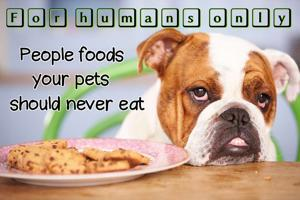 12 people foods your pets should never eat