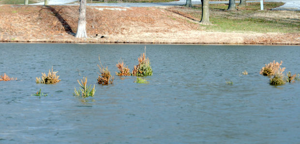 Christmas trees make new home for rend lake fish for Rend lake fishing