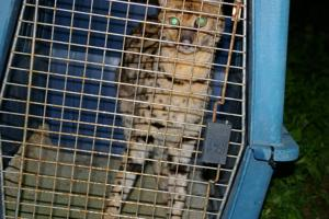 More than 50 animals rescued from home north of Creal Springs