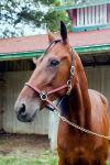 083115-nws-dq-horses