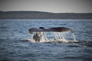 Photos: Exploring Nova Scotia