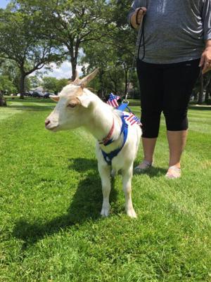 Bono the goat