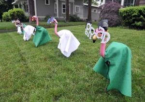 grad flamingos