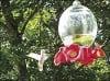 Albino hummingbird spotted in North