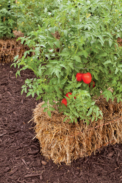 Summers hottest trend Gardening in straw bales Life