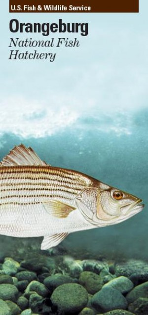 Orangeburg Hatchery Works To Restore Endangered Species