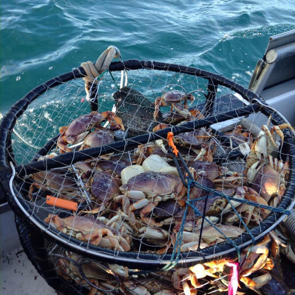 Coast guard and state wildlife officials monitor dungeness for Crab fishing oregon