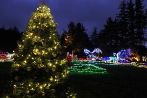 Shore Acres Lights