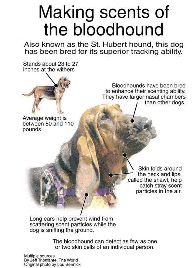 Buy Now Bloodhound 6 Months
