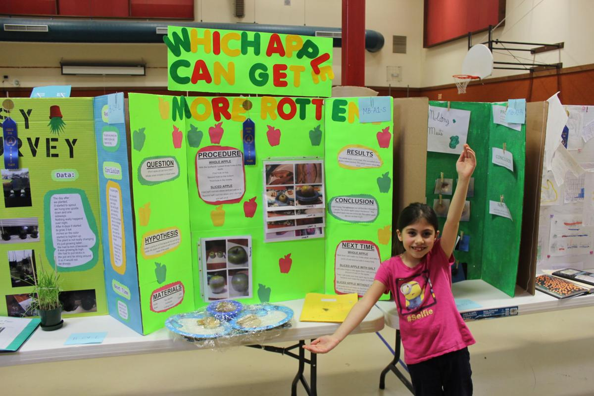 how to set up a science fair project