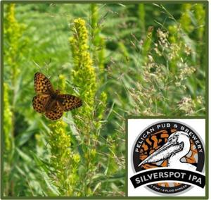 Silverspot Butterfly and IPA