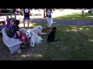 Mutt Strutt, canine party takes over local park