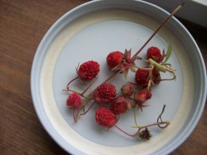 <p>Nothing tastes sweeter than a handful of wild strawberries.</p>