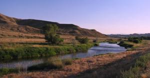 Ucross Foundation ranch designated as important bird area