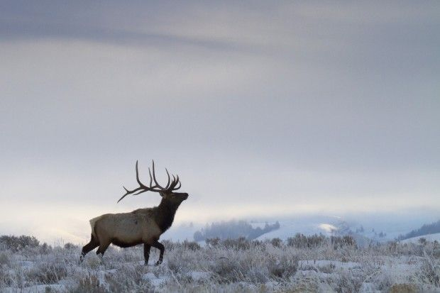 Wyoming Game And Fish Snow Hinders Iron Mountain Hunting
