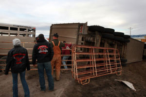 WHP cited drivers in crash that killed 20 cattle
